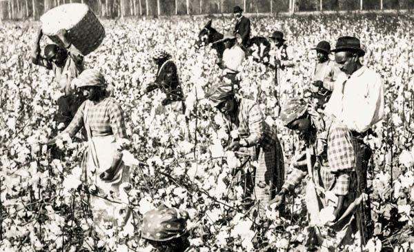 Enslaved Black people picking cotton